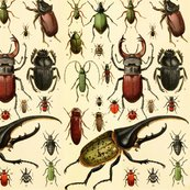 Beetles_taxonomy_tileable_clean2_shop_thumb
