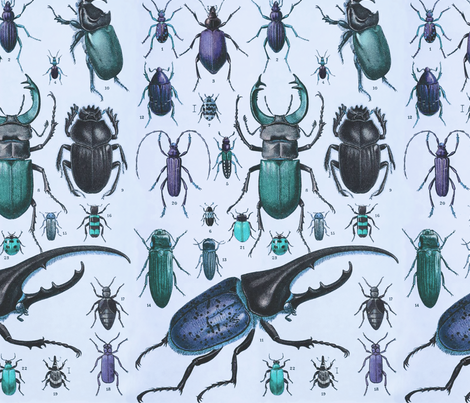 Beetles Insect Taxonomy Print Engraving Bug fabric by magnoliacollection on Spoonflower - custom fabric