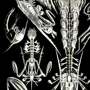 Crab Crustaceans Lobster Ernst Haeckel Crayfish Crawdad Sea Life
