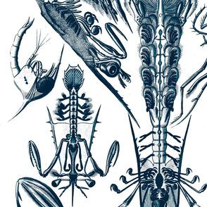 Crab Crustaceans Lobster Ernst Haeckel Crayfis.