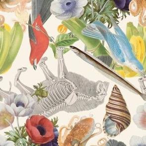 Scientific Illustrations (large)