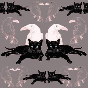 Cats v White Ravens