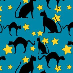black cats star lit night