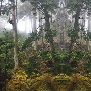 HaidaGwaii Forest