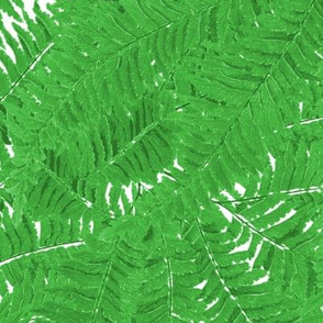 Tropical Fern ~ Jungle Green