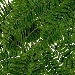 Tropical Fern ~ White