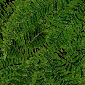 Tropical Fern ~ Black