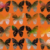 Dark stark orange butterflies on hot orange