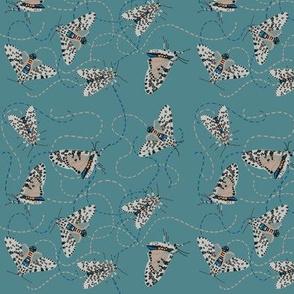 leopard moth buzz [kale]