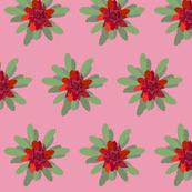 2941 Waratah#1-Pink
