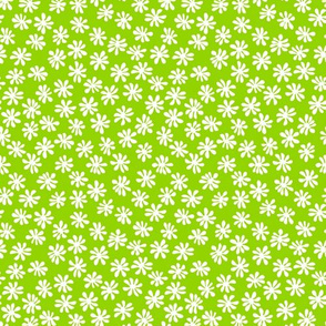 Gerberas Bright Trio - Macro Florals in White