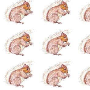 Squirrel by Liz H Lovell