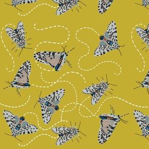 leopard moth buzz [yarrow]