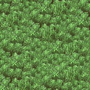 Moss  // green