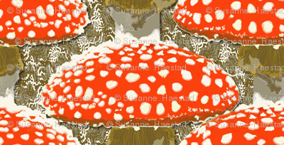Amanita muscaria  on brown