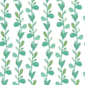Succulent vine - BIG