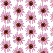 Coneflower Pink