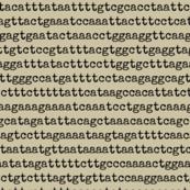 genome-05
