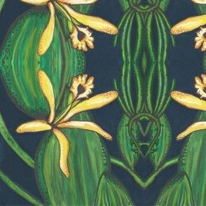 Vanilla - orchid