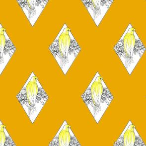 Canary on Orange