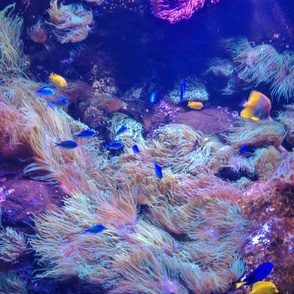 Coral reef life by Liz H Lovell