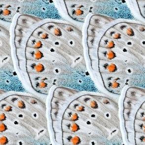 butterfly wings frost