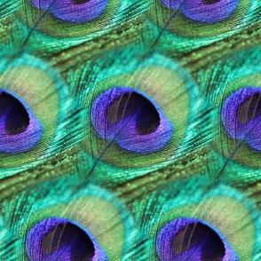 Peacock Parade