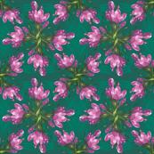 Pink Snow crocus flowers