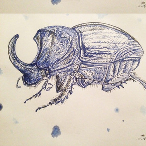Horned Scarab Beetle by Liz H Lovell