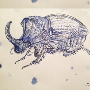 Horned Scarab Beetle by Liz H Lovell