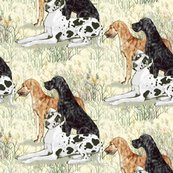 Harlequin_black_and_brindle_great_danes_in_wildflowers_rev_shop_thumb