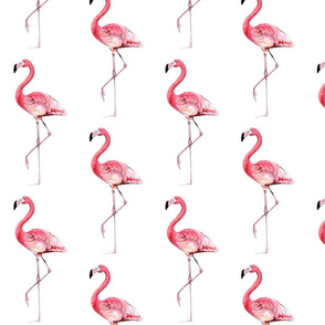 flamingoes3