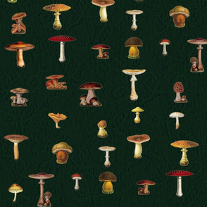 Green Lace Mushrooms