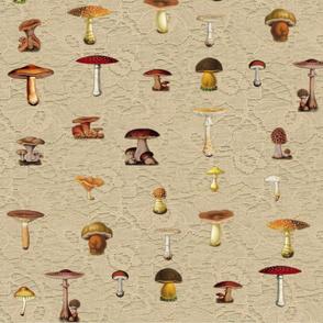 Cream Lace Mushrooms