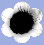 Periwinkle Poppy