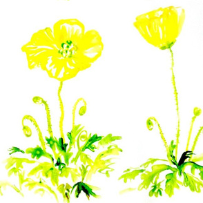 Yellow Poppies by Liz H Lovell