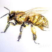 Buzzy Bee by Liz H Lovell-ed