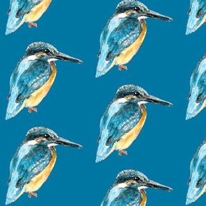 kingfisherteal