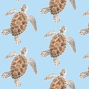 turtleblue