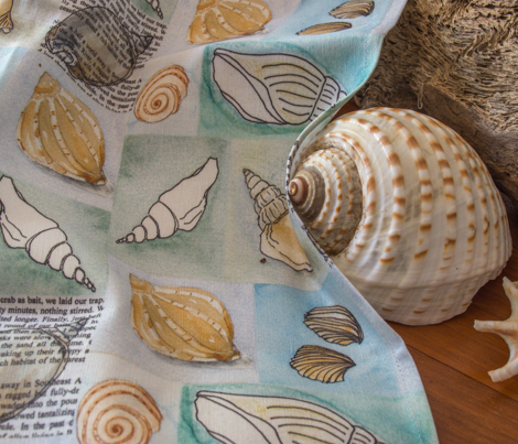 Sea shell collage