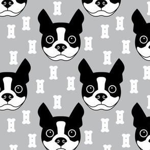 boston-terrier-and-dog-biscuits-on-grey-background