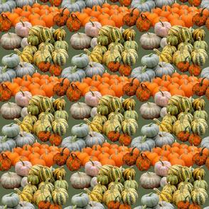 harvest_3_6x6
