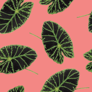 Floral Fern Lilypad Toss in Salmon
