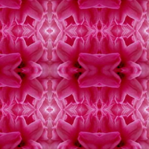 pink space flowers