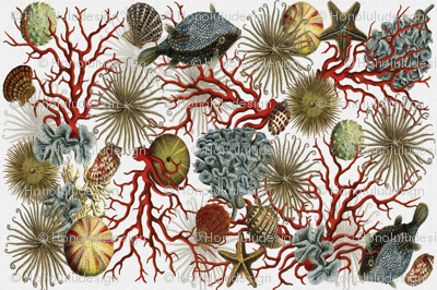 Illustrations of Underwater Life
