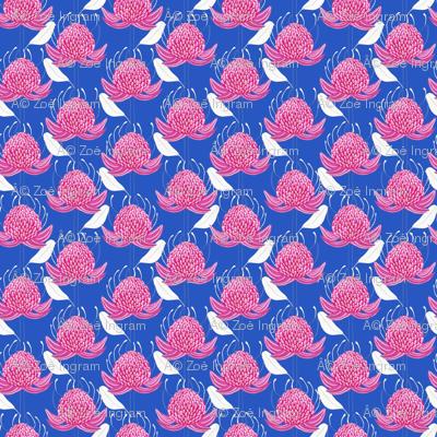 Waratah Blue