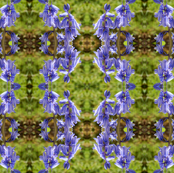Bluebell_Patterns