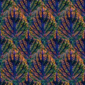 Coleus Leaf 1