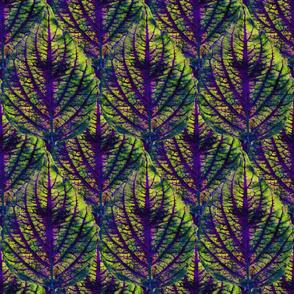 Coleus Leaf 2