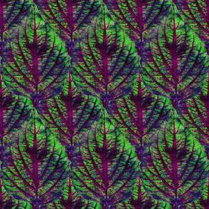 Coleus Leaf 3